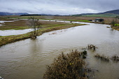 The River Clyde after bursting its banks at Thankerton, South Lanarkshire. Andrew Wilson / Scottish Viewpoi 2013,winter,weather,extreme,flood,flooding,flooded,wet,rain,raining,cloudy,water,spate,field,fields,agriculture,arable,farm,farms,farming,countryside