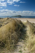 Looking over to the island of Fidra from the dunes by Yellowcraig Beach, East Lothian. Keith Fergus / Scottish Viewpoin 2013,spring,sunny,sunshine,beach,beaches,sand,sandy,coast,coastal,coastline,water,sea,firth,forth,light,house,lighthouse,dunes,dune,grass,grasses