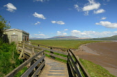 The walkway to the hide at Wigtown Bay Local Nature Reserve, Dumfries and Galloway. Keith Kirk / Scottish Viewpoint summer,sunny,fauna,wildlife,wild,bird,birds,activity,activities,birdwatching,birdwatcher,birdwatchers,twitching,twitcher,twitchers,attraction,attractions,visitor,tourist