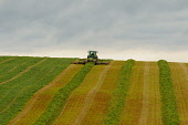 A tractor harvesting a crop, Dumfries and Galloway. Keith Kirk / Scottish Viewpoint summer,agriculture,arable,field,fields,crops,farm,farms,countryside