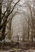 A farm track through an avenue of trees near Fort William, on a frosty misty day, Highlands of Scotland. Kenny Ferguson / Scottish Viewpo winter,weather,climate,cold,fog,extreme,freezing,ice,frost,heavy,path,mist,misty,atmospheric,atmosphere,countryside,gate,gates