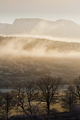 Looking over towards Ben Nevis on a frosty, misty day, Highlands of Scotland. Kenny Ferguson / Scottish Viewpo winter,sunny,sunshine,weather,climate,cold,fog,extreme,freezing,ice,frost,heavy,mist,misty,atmospheric,atmosphere,munro,mountain,mountains,forest,forestry,tree,trees