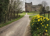 The road leading to the substantial remains of Doune Castle. Bill McKenzie / Scottish Viewpoi spring,overcast,clouds,cloud,cloudy,atmospheric,atmosphere,HDR,scotland,doune,castle,attraction,attractions,visitor,tourist,history,heritage,historic,hs,daffodils,flower,flowers