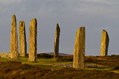A winter sun illuminates the standing stones of the Ring of Brodgar, West Mainland, Orkney. Mark Ferguson / Scottish Viewpoi Orkney,stone,circle,standing,stones,pagan,age,neolithic,prehistoric,ancient,monument,henge,archaeology,winter,sunrise,megalithic,Ring,Brodgar,sunny,atmospheric,atmosphere,attraction,attractions,visito