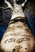A detail of the carved lettering on tree trunk by the graveyard in Glen Nevis, Highlands of Scotland. Kenny Ferguson / Scottish Viewpo 2014,detail,carved,lettering,letters,letter,glen,nevis,highland,highlands,inscription,atmospheric,atmosphere,spooky,mystery,love,heart,bark,tree,trees,trunk