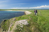 A couple walking on the path above the beach at Dingieshowe, Mainland, Orkney. Picture Credit : Iain Sarjeant / Scottish Viewpoint  Tel: +44 (0) 131 622 7174  E-Mail : info@scottishviewpoint.com  Web:... 2012,summer,sunny,island,islands,isle,isles,people,person,beach,sand,sandy,white,romantic,activity,activities,walk,walking,walker,walkers,coast,coastal,coastline,water,sea,deerness