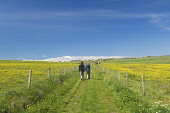 A couple walking on a farm track at Deerness, Mainland, Orkney. Picture Credit : Iain Sarjeant / Scottish Viewpoint  Tel: +44 (0) 131 622 7174  E-Mail : info@scottishviewpoint.com  Web: www.scottishvi... 2012,summer,sunny,island,islands,isle,isles,people,person,romantic,activity,activities,walk,walking,walker,walkers,coast,coastal,coastline,water,sea,deerness