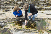 Exploring the rockpools, Birsay, Orkney. Picture Credit : Iain Sarjeant / Scottish Viewpoint  Tel: +44 (0) 131 622 7174  E-Mail : info@scottishviewpoint.com  Web: www.scottishviewpoint.com This photog... 2012,island,islands,isle,isles,summer,child,children,kid,kids,family,families,coast,coastal,coastline,water,sea,activity,rockpooling,seaweed,play,playing,education,learn,learning