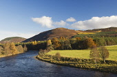 River Dee, near Braemar, Deeside, Aberdeenshire Iain Sarjeant / Scottish Viewpoi autumn,autumnal,2013,tree,trees,forest,forests,woodland,woodlands,forestry,mountains,mountain,hill,hills