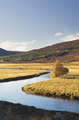 River Dee, near Braemar, Deeside, Aberdeenshire  * Iain Sarjeant / Scottish Viewpoi autumn,autumnal,2013,tree,trees,forest,forests,woodland,woodlands,forestry,mountains,mountain,hill,hills