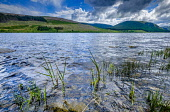 St Mary's Loch, Scottish Borders, Scotland Andrew Wilson/ Scottish Viewpoin St,Marys,Loch,Scottish,Borders,Scotland,water,loch, dull,cloudy,spring,springtime,May,shore,shoreline,lochs,uk,u.k,great,britain,blue,no,people,mountain,mountains,hill,hills, no, people