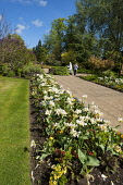 A woman walking in Elgin Bible Garden, by the Cathedral, Moray, Scotland. Dennis Barnes / Scottish Viewpoi 2014,horizontal,spring,sunny,sunshine,blue,sky,day,Elgin,Bible,Garden,Cathedral,Moray,Scotland,Scottish,UK,U.K,United,Kingdom,heritage,tourist,Attraction,Tourism,Visitor,one,woman,only,60-70,years,eld
