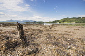 The view along the southern side of Loch Laich at low tide to Castle Stalker, Argyll, Scotland. Chris Lauder / Scottish Viewpoin 2013,horizontal,summer,sunny,sunshine,coast,coastal,coastline,water,sea,loch,cloud,clouds,foreshore,blue,sky,skies,argyll,laich,castle,stalker,day,no people,nobody,seaweed,low,tide,post,wooden,Scotlan