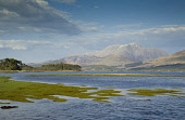 Looking across Inverscaddle Bay and Loch Linnhe to Ben Nevis, Ardgour, Highlands of Scotland. Allan Wright / Scottish Viewpoin horizontal,day,spring,sunny,sunshine,cloud,clouds,blue,sky,skies,water,stream,Highland,Highlands,Lochaber,no people,nobody,Scottish,UK,U.K,Great,Britain,hills,mountains,Loch,Linnhe,Ben,Nevis,Inverscad