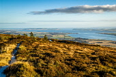 The Cromarty Firth and Invergordon from Cnoc Fyrish above Evanton, Highlands of Scotland. Alan Gordon / Scottish Viewpoint Cromarty Firth,Evanton,Fyrish,Highlands,Ramsar,autumn,autumnal,coast,coastal,coastline,water,sea,mountain,mountains,hill,hills,town,ice,icy,frost,frosty,sunny,uk,g.b,Great Britain,United Kingdom,day,n