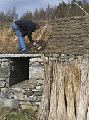 A man thatching the roof of a traditional blackhouse croft at the Highland Folk Museum, Newtonmore, Highlands of Scotland. Doug Houghton / Scottish Viewpoi vertical,outdoors,outside,summer,sunny,blackhouse,black,house,thatching,roof,thatched,cottage,croft,Highland Folk Museum,one man only,1 person,50-60 years,traditional,Newtonmore,Highlands,thatch,herit