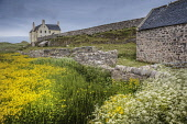 Wild flowers growing by Balnakiel House near Durness, Highlands of Scotland Bill McKenzie / Scottish Viewpoi horizontal,outside,outdoors,day,summer,Balnakiel House,mansion,Durness,Highland,Scotland,Scottish,UK,U.K,Great Britain,nobody,building,wild flowers,flora,self catering,accommodation,HDR,atmospheric