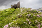 The ruined remains of the Castle of Old Wick on a cliff top near Wick, Caithness, Highlands of Scotland. Bill McKenzie / Scottish Viewpoi horizontal,outside,outdoors,day,summer,overcast,cloudy,Castle of Old Wick,Caithness,Highland,Scotland,Scottish,UK,U.K,Great Britain,nobody,HDR,atmospheric,history,heritage,building,ruin,ruined,wild fl