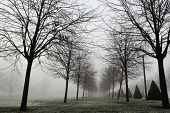 Fog envelops Glasgow Green on a cold winter's day, east of the city centre of Glasgow, Scotland. Tony Clerkson / Scottish Viewpoi horizontal,outside,outdoors,exterior,winter,day,weather,Glasgow,Green,city,fog,foggy,mist,misty,cold,wintry,freezing fog,trees,branches,bleak,austere,atmospheric,Scotland,Scottish,UK,U.K,Great Britain