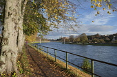 A woman walking on the path by the River Ness, with a view towards the city centre of Inverness where the castle is visible, Highlands of Scotland. Dennis Barnes / Scottish Viewpoi horizontal,outside,outdoors,day,autumn,autumnal,sunny,sunshine,blue sky,River Ness,Inverness,Scotland,Scottish,UK,U.K,United Kingdom,one woman only,1 person,60-70 years,elderly,fallen leaves,walker,wa