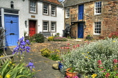 A courtyard garden in the village of Crail, East Neuk of Fife, Scotland Ross Graham/ Scottish Viewpoint Crail,Fife,East Neuk,uk,u.k,Great Britain,GB,G.B,Scotland,Scottish,nobody,summer,sunny,house,cottage,outdoors,outside,pantile roof,flowers,courtyard,daytime