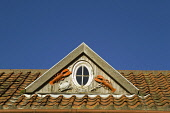 Pantiled roof top and a window decorated with lobsters, Crail, Fife, Scotland Allan Wright/ Scottish Viewpoint uk,u.k,Great Britain,GB,G.B,Scotland,Scottish,Fife,nobody,outdoors,daytime,autumn,sunny,history,Crail,pantiles,pantile roof,window,lobsters,detail