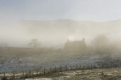 A farmhouse on a misty hillside above Loch Tay, Perthshire, Scotland Allan Wright / Scottish Viewpoin horizontal,outdoors,outside,day,winter,sunny,Loch Tay,Perthshire,Scotland,Scottish,UK,U.K,Great Britain,nobody,snow,cold,atmospheric,weather,mist,misty,fog,foggy,frost,frozen,sunlight,trees,farmhouse,
