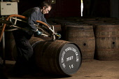 A distillery worker filling a cask at the Tomatin Distillery - a Highland single malt Scotch whisky distillery, Tomatin, Highlands of Scotland. John Paul / Scottish Viewpoint horizontal,inside,interior,indoors,Tomatin Distillery,Tomatin,Highland,Scotland,Scottish,UK,U.K,Great Britain,1 person,one man only,40-50 years,single malt,whisky,blended,Speyside,barrel,cask,store,sp