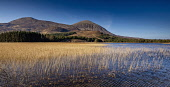 Reed beds on Loch Cill Chriosd, with Beinn na Caillich - one of the Red Cuillin visible beyond, near Broadford on the Isle of Skye, Inner Hebrides, Scotland. Andrew Wilson / Scottish Viewpoi horizontal,outdoors,outside,day,winter,sunny,sunshine,Loch Cill Chriosd,Beinn na Caillich,Skye,island,isle,Inner Hebrides,Highland,Scotland,Scottish,UK,U.K,Great Britain,nobody,moorland,mountains,wate