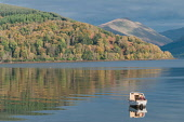 A man fishing from a small boat on Loch Fyne at Inveraray, Argyll, Scotland. D.G.Farquhar / Scottish Viewpoin horizontal,outdoors,outside,day,autumn,sunny,Loch Fyne,Inverary,Argyll,Scotland,Scottish,UK,U.K,Great Britain,calm,water,hills,peaceful,small boat,one man only,1 person,40-50 years,reflection
