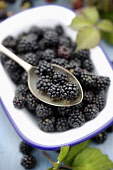 Blackberries in a dish surrounded by fresh blackberries and blackberry leaves Paul Dodds / Scottish Viewpoint nobody,daytime,indoors,autumn,autumnal,blackberries,blackberry,fruit,fruits