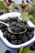 Blackberries in a dish surrounded by fresh blackberries and blackberry leaves Paul Dodds / Scottish Viewpoint nobody,daytime,indoors,autumn,autumnal,blackberries,blackberry,fruit,fruits,food