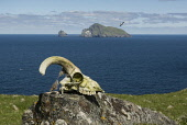 The archipelago of St Kilda, Outer Hebrides, Scotland Allan Wright/ Scottish Viewpoint uk,u.k,Great Britain,GB,G.B,Scotland,Scottish,nobody,outdoors,daytime,Summer,st kilda,Outer Hebrides,world heritage site,archipelago,coast,coastal,coastline,water,sea,island,islands,sheep,skull