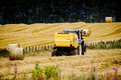 Making large straw bales in a wheat field, South Lanarkshire. Scotland Andrew Wilson / Scottish Viewpoint Farmer,Scotland,field,machinery,tractor,autumn,harvest,straw