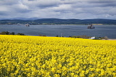 Looking north from Black Isle to Cromarty Firth, Rape seed, oil rig, Highland, Scotland. Dennis Barnes/ Scottish Viewpoint uk,u.k,Great Britain,GB,G.B,Scotland,Scottish,nobody,daytime,outdoors,summer,black,isle,cromarty,firth,yellow,flowers,oil,rigs,highland,highlands