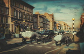 Wild animals in an urban setting, Edinburgh, Scotland Lee Howell/ Scottish Viewpoint uk,u.k,Great Britain,GB,G.B,Scotland,Scottish,nobody,daytime,outdoors,Edinburgh,urban,streetlife,city,life,scene,scenes,street,animals,tapir,tapirs