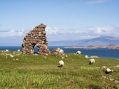 Ruins of Bishop house at Iona Abbey, Isle of Iona, Scotland. Southwest of the Abbey. Middle wall, all the remains of home to the Bishop of the Isles in the early 16th century. Rose-pink granite boulde... Allan Coutts/ Scottish Viewpoint uk,u.k,Great Britain,GB,G.B,Scotland,Scottish,nobody,daytime,abbey,bishop,bishops,boulder,boulders,coast,easbuig,granite,hebrides,house,inner,iona,lime,ruin,ruins,the bishops house,tigh,tigh an easbui
