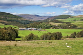 Pastoral landscape near Tomintoul,  Highland, Scotland, UK Dennis Barnes/ Scottish Viewpoint uk,u.k,Great Britain,GB,G.B,Scotland,Scottish,nobody,daytime,Pastoral,farming,landscape,highland,highlands,agriculture,livestock,animal,animals,graze,grazing,farm,farms,countryside