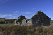 A ruined croft, Caithness, Highlands of Scotland Mark Hicken/ Scottish Viewpoint uk,u.k,Great Britain,GB,G.B,Scotland,Scottish,nobody,daytime,outdoors,derelict bothy,tree,caithness,croft,crofts,crofting,ruin,ruins,stone,ruined,red,deer