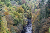 Perthshire, Scotland, United Kingdom. 21 October, 2017. Spectacular autumn colours in natural woodland on banks of River Garry at historic Pass of Killicrankie near Pitlochry. Iain Masterton/ Scottish Viewpoint Killicrankie,autumn,autumnal,colors,colours,colour,River Garry,season,seasons,seasonal,Pass of Killicrankie,Scotland,Scottish,scenery,landscape,scenic,tourism,travel,daytime,woodland,trees,forests,nat