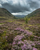 Rybhoan pass, Glenmore, northern Cairngorms, Scotland Alan Gordon/ Scottish Viewpoint Abernethy,Cairngorms,Glen More,Highlands,National Park,National Scenic Area,Nature Reserve,Rybhoan,SSSI,Scotland,atmospheric,clouds,cloudy,dramatic,glen,heather,hills,landscape,mountains,nobody,overca