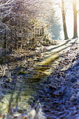 Frost covered plants, backlit, path David Cameron/Scottish Viewpoint frost,frosty,winter,freezing,artistic,pattern,design,textures,plants,backlit,path,light