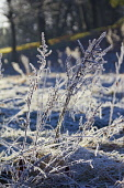 Frost covered plants David Cameron/Scottish Viewpoint frost,frosty,winter,freezing,artistic,pattern,design,textures,plants