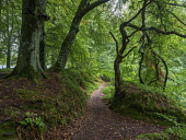 Footpath through forest next to River North Esk, that flows through wooded gorge near Gannochy Bridge, Edzell. Scotland Allan Coutts/Scottish Viewpoint u.k,Great Britain,GB,G.B,Scotland,Scottish,nobody,daytime,outdoors,angus,autumnal,autumn,forest,tree,trees,path,trail,footpath