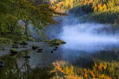 Misty Autumn Shore - Loch Lubnaig, Scotland Tim Perceval/Scottish Viewpoint uk,u.k,Great Britain,GB,G.B,Scotland,Scottish,nobody,daytime,outdoors,reflections,autumn,blue,mist,misty,colours,water
