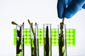 Science stock shootPicture Credit John Paul/HIE 2017,Marine Biotechnology,Industrial Biotechnology,Pharmaceuticals,Natural Products,Laboratory,science,life science,experiment,test tube,test tubes,natural,products,green,seaweed,marine,hand,gloves,wa