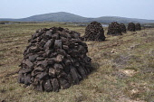 peat stacks;cheese bay;north uist;scotland Mark Hicken /Scottish Viewpoint uk,u.k,Great Britain,GB,G.B,Scotland,Scottish,nobody,daytime,outdoors,peat,heat,fuel,stacks,peat stacks,field,cut,store,winter,stores,cheese bay,north uist