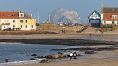 View of Bass Rock and North Berwick harbour buildings from West Bay beach at low tide on autumn afternoon, East Lothian,Scotland ,UK. Iain Masterton /Scottish Viewpoint North Berwick,Bass Rock,Scotland,Scottish,town,west bay North Berwick,view,harbour,beach,afternoon,sun,low tide,East Lothian,UK,united Kingdom,Britain,British,coastal,towns,scenic,travel destinations,