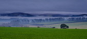 Low cloud hangs over the Clyde valley near Biggar. Scotland Andrew Wilson/Scottish Viewpoint uk,u.k,Great Britain,GB,G.B,Scotland,Scottish,nobody,daytime,outdoors,dark,dusk,evening,low cloud,weather,winter,countryside,fields,misty,foggy