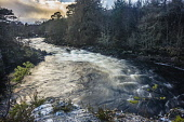 The River Bran at Grudie, Lochluichart Alan Gordon/Scottish Viewpoint Grudie,Highlands,Lochluichart,Ross and Cromarty,Scotland,atmospheric,clouds,cloudy,conifer,dramatic,falls,forest,nobody,rapids,river,stream,trees,water,waterfall,winter